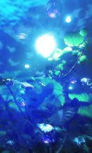 Sea_junglec_mid