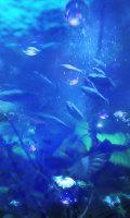 Sea_jungleb_mid_1